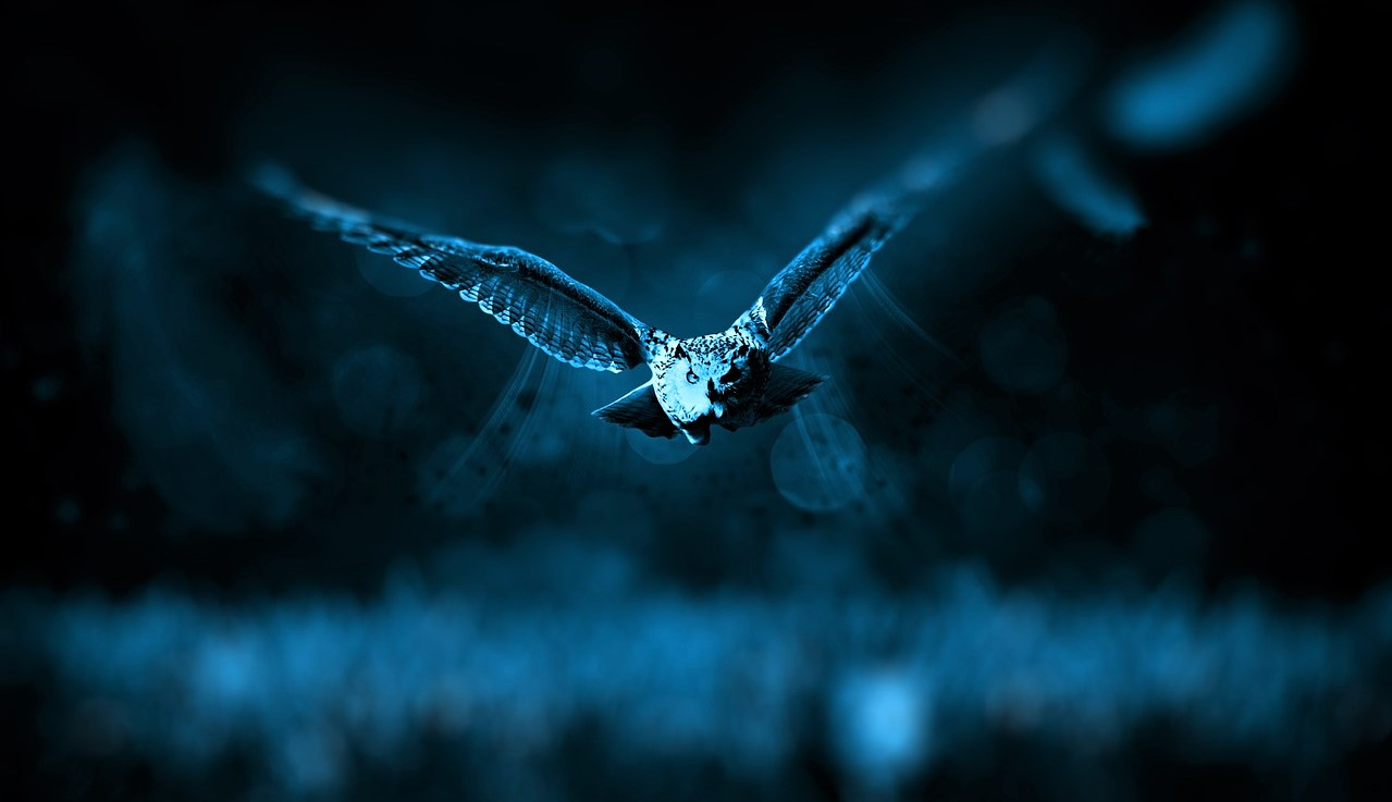 An owl flying at night